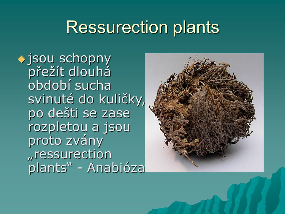 Ressurection plants