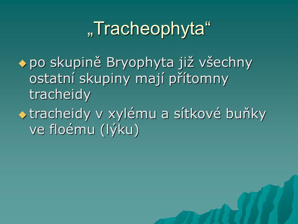 """""""Tracheophyta po skupině Bryophyta již všechny ostatní skupiny mají přítomny tracheidy."""