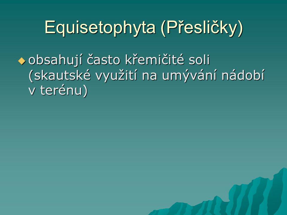 Equisetophyta (Přesličky)