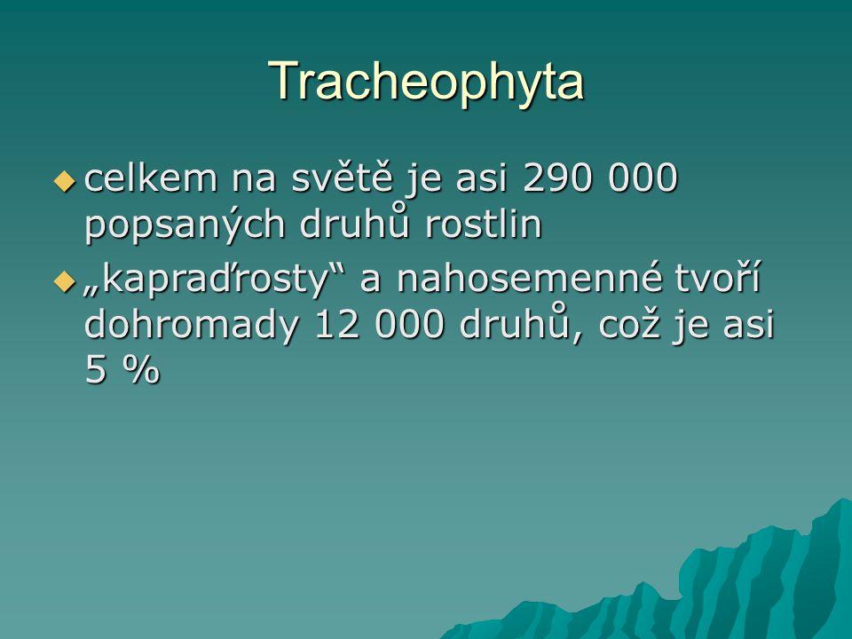 Tracheophyta celkem na světě je asi 290 000 popsaných druhů rostlin