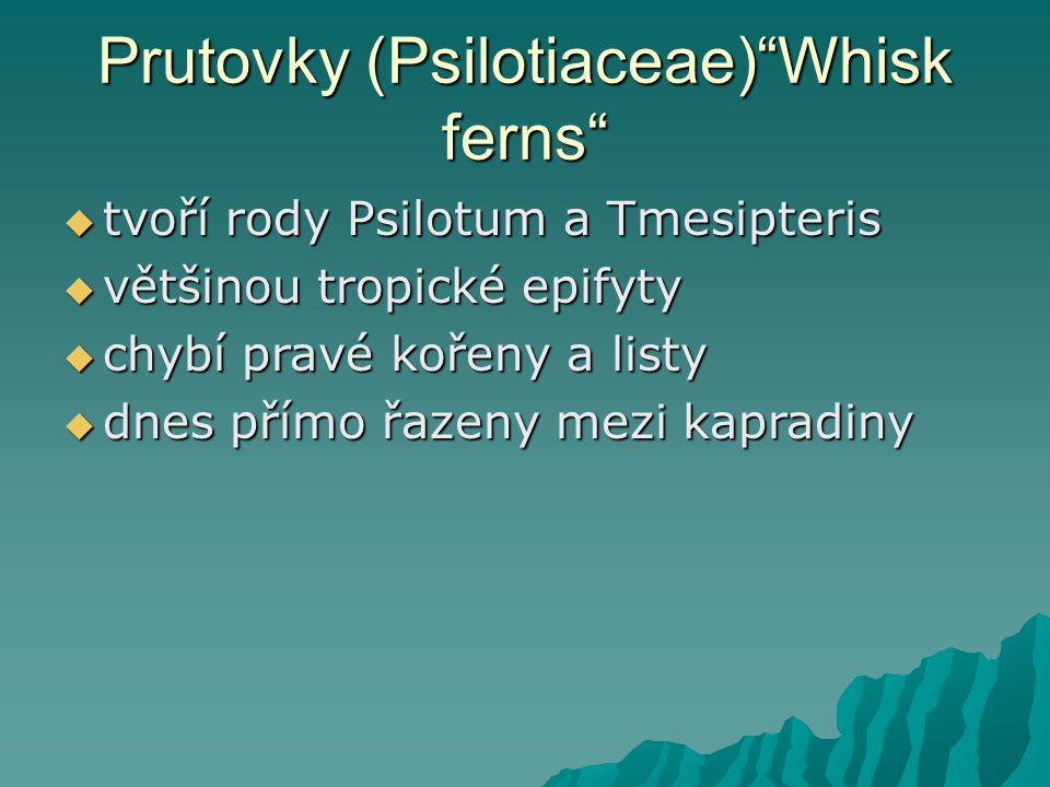 Prutovky (Psilotiaceae) Whisk ferns