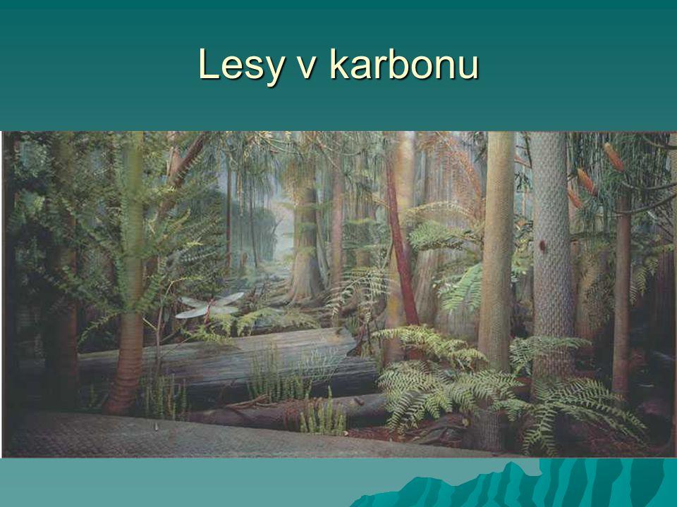 Lesy v karbonu