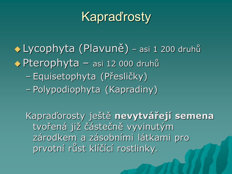 Kapraďrosty Lycophyta (Plavuně) – asi 1 200 druhů