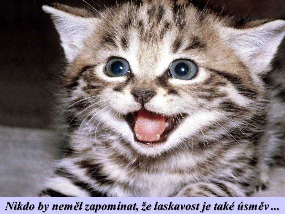 Nikdo by neměl zapomínat, že laskavost je také úsměv ...