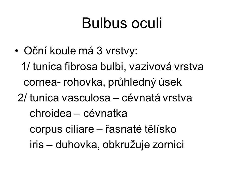 Bulbus oculi Oční koule má 3 vrstvy: