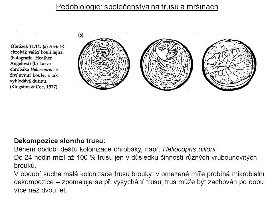 Pedobiologie: společenstva na trusu a mršinách