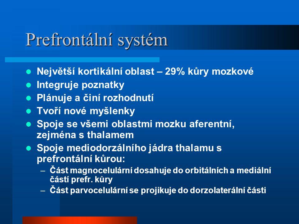 Prefrontální systém Největší kortikální oblast – 29% kůry mozkové