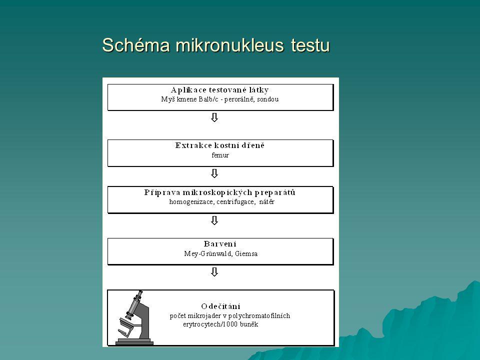 Schéma mikronukleus testu