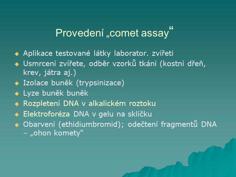 """Provedení """"comet assay"""