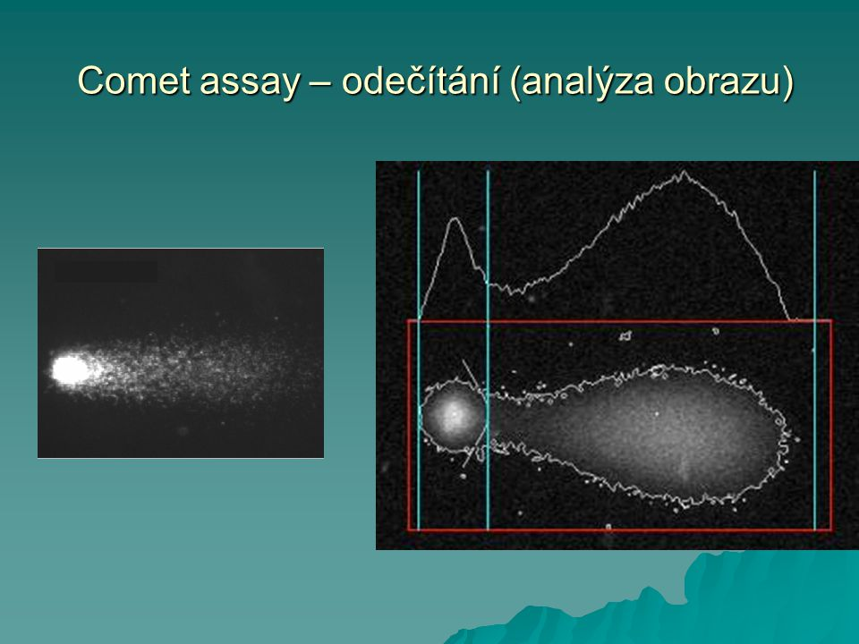 Comet assay – odečítání (analýza obrazu)