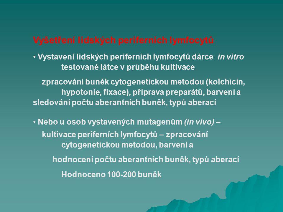 Vyšetření lidských periferních lymfocytů