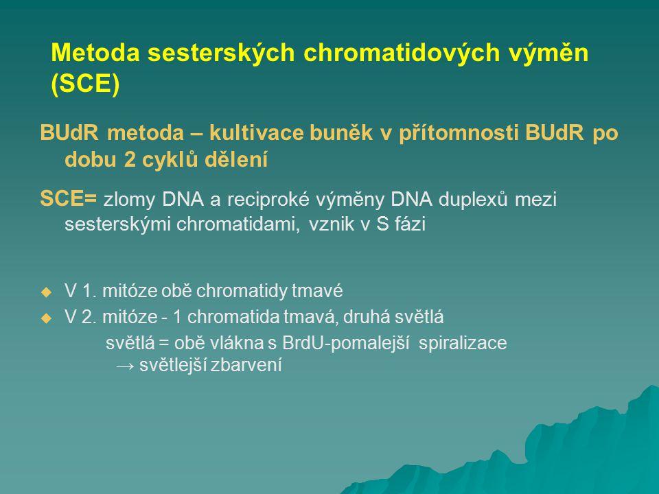 Metoda sesterských chromatidových výměn (SCE)