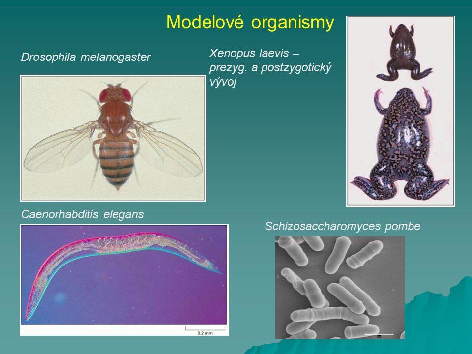 Modelové organismy Xenopus laevis – Drosophila melanogaster