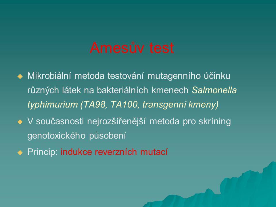 Amesův test