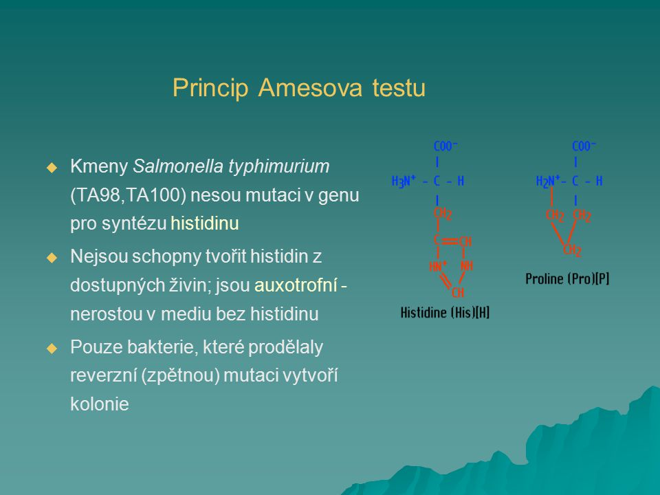 Princip Amesova testu Kmeny Salmonella typhimurium (TA98,TA100) nesou mutaci v genu pro syntézu histidinu.
