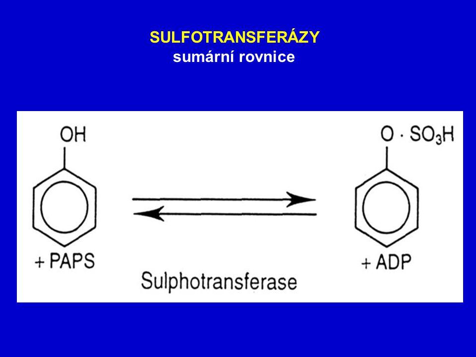 SULFOTRANSFERÁZY sumární rovnice