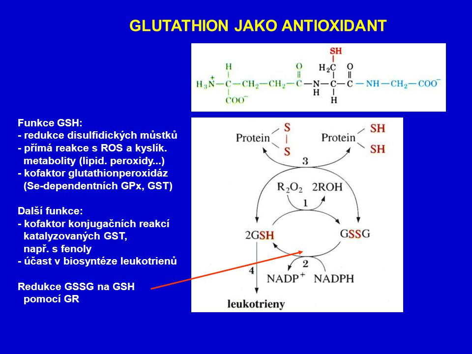 GLUTATHION JAKO ANTIOXIDANT