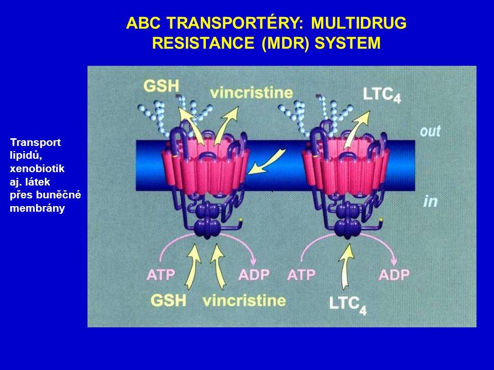 ABC TRANSPORTÉRY: MULTIDRUG RESISTANCE (MDR) SYSTEM