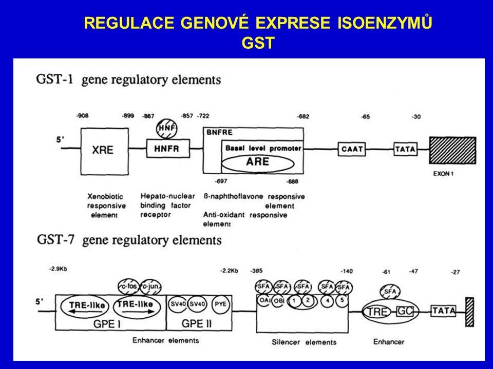 REGULACE GENOVÉ EXPRESE ISOENZYMŮ GST