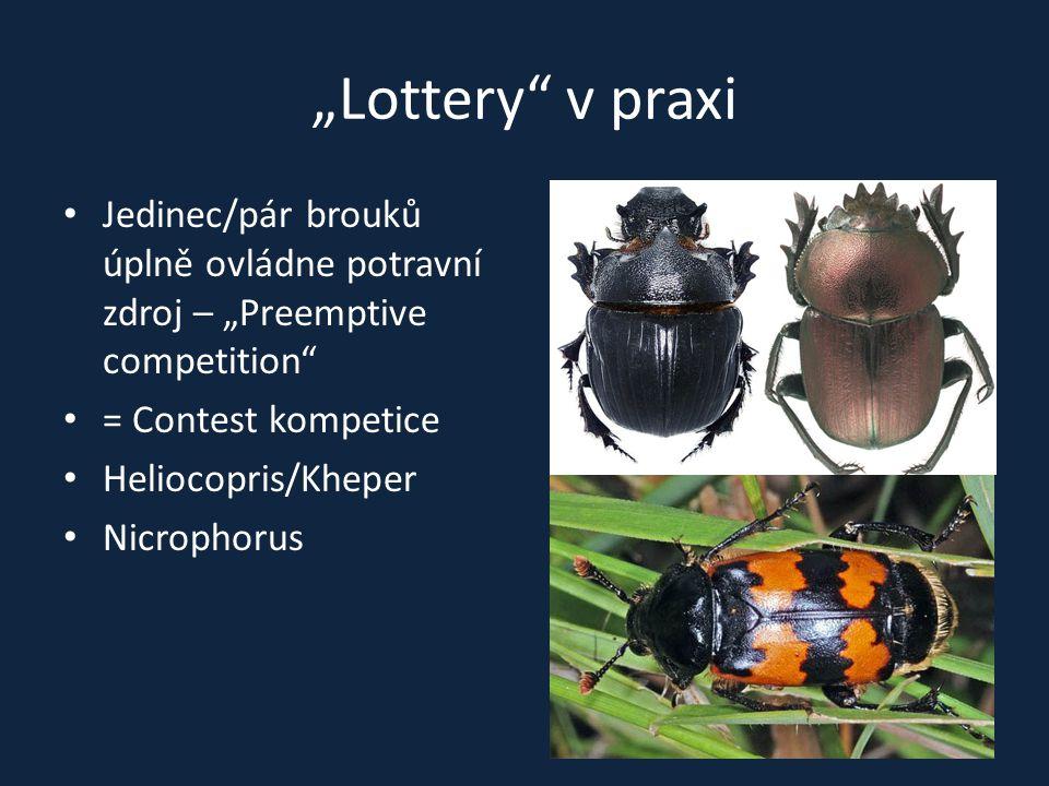 """""""Lottery v praxi Jedinec/pár brouků úplně ovládne potravní zdroj – """"Preemptive competition = Contest kompetice."""
