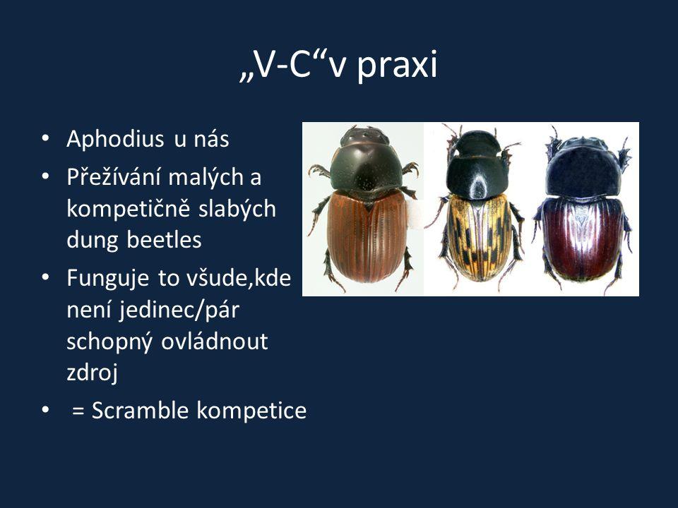 """""""V-C v praxi Aphodius u nás"""