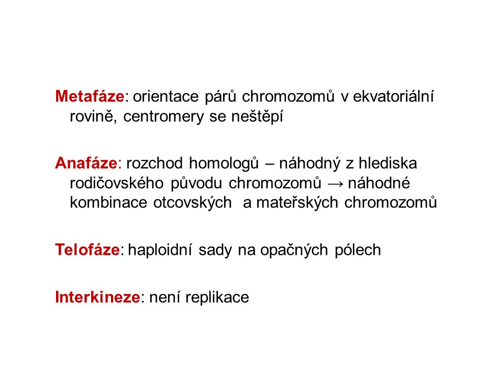 Metafáze: orientace párů chromozomů v ekvatoriální rovině, centromery se neštěpí Anafáze: rozchod homologů – náhodný z hlediska rodičovského původu chromozomů → náhodné kombinace otcovských a mateřských chromozomů Telofáze: haploidní sady na opačných pólech Interkineze: není replikace