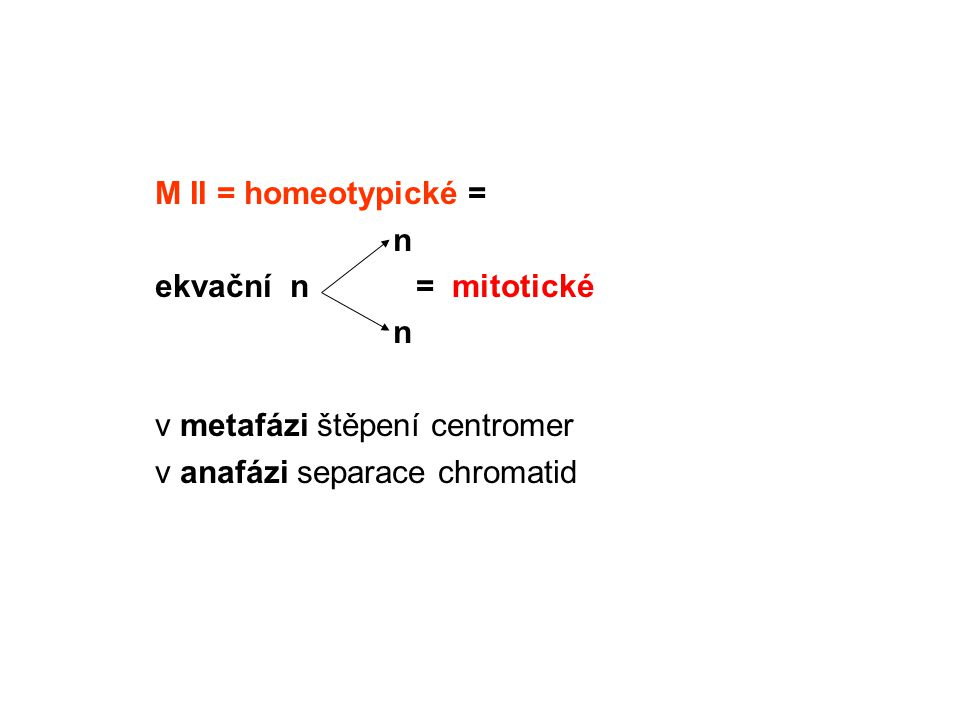 M II = homeotypické = n ekvační n = mitotické v metafázi štěpení centromer v anafázi separace chromatid