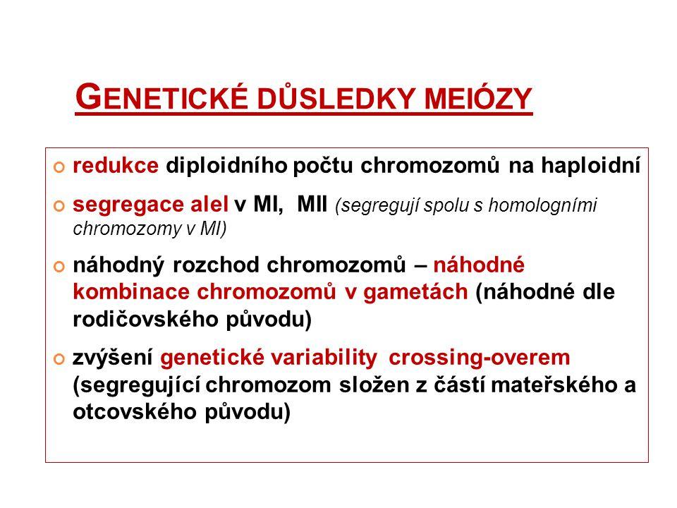Genetické důsledky meiózy