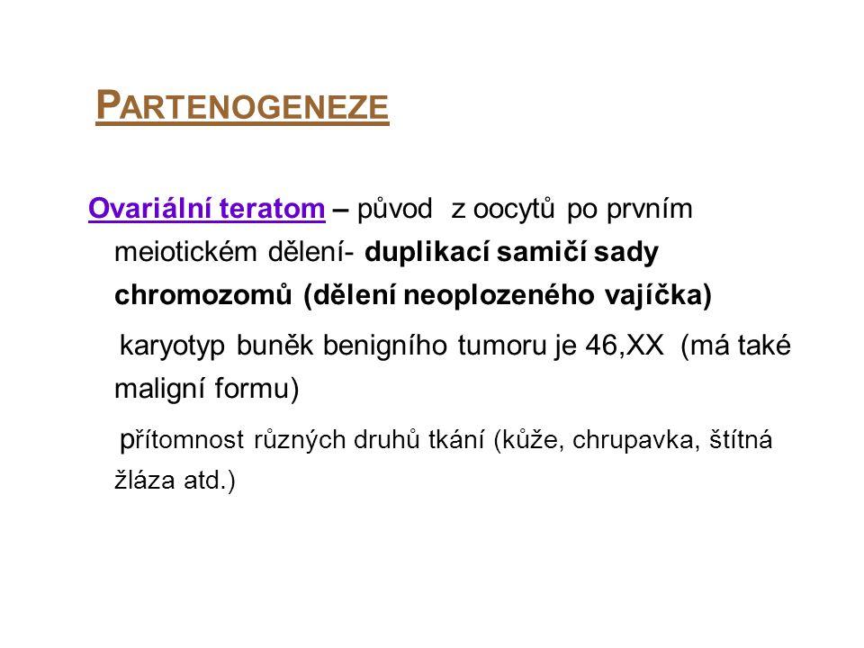 Partenogeneze