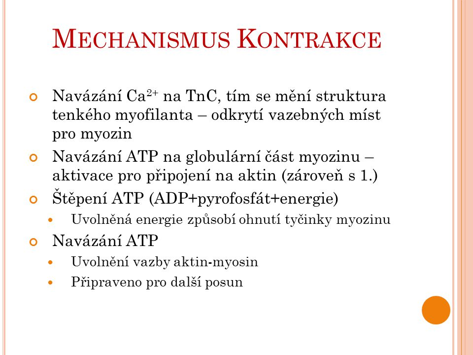 Mechanismus Kontrakce