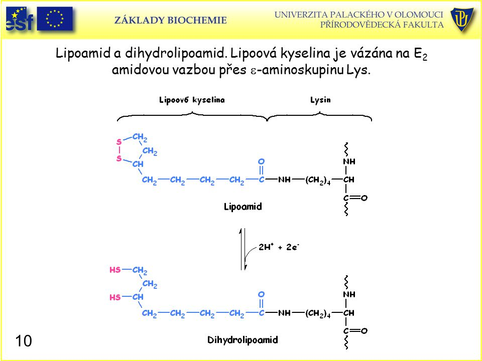 Lipoamid a dihydrolipoamid
