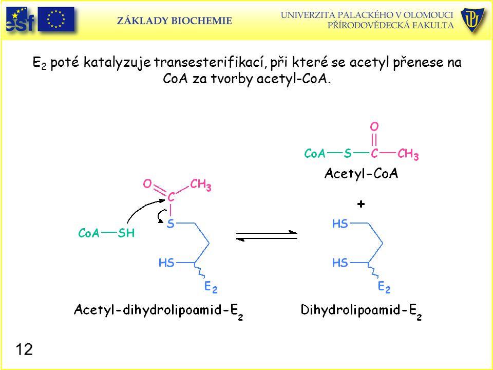 E2 poté katalyzuje transesterifikací, při které se acetyl přenese na CoA za tvorby acetyl-CoA.