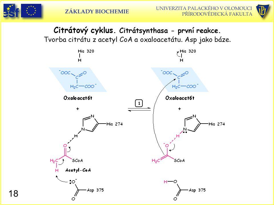 Citrátový cyklus. Citrátsynthasa - první reakce