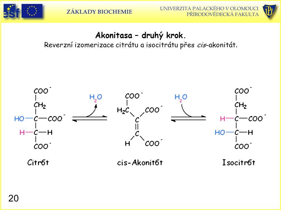 Akonitasa – druhý krok. Reverzní izomerizace citrátu a isocitrátu přes cis-akonitát.