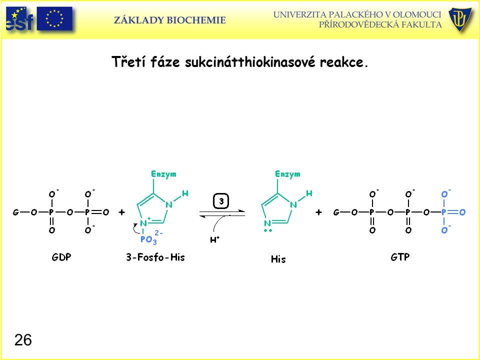 Třetí fáze sukcinátthiokinasové reakce.