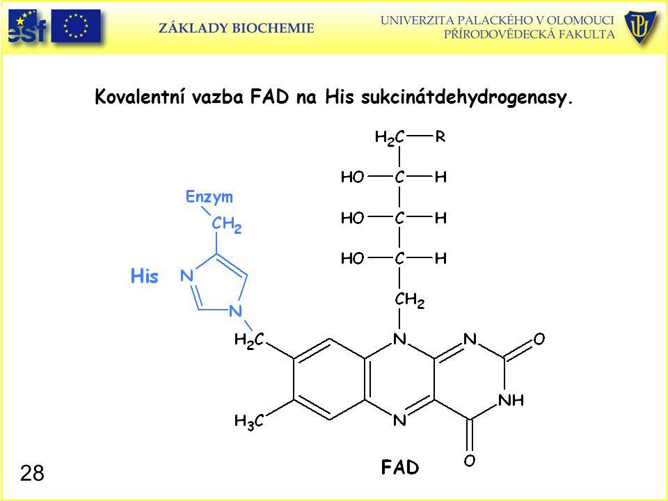 Kovalentní vazba FAD na His sukcinátdehydrogenasy.