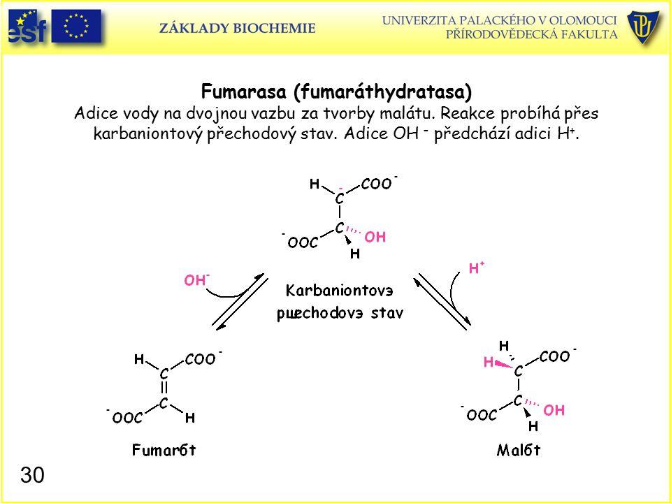 Fumarasa (fumaráthydratasa) Adice vody na dvojnou vazbu za tvorby malátu. Reakce probíhá přes karbaniontový přechodový stav. Adice OH – předchází adici H+.