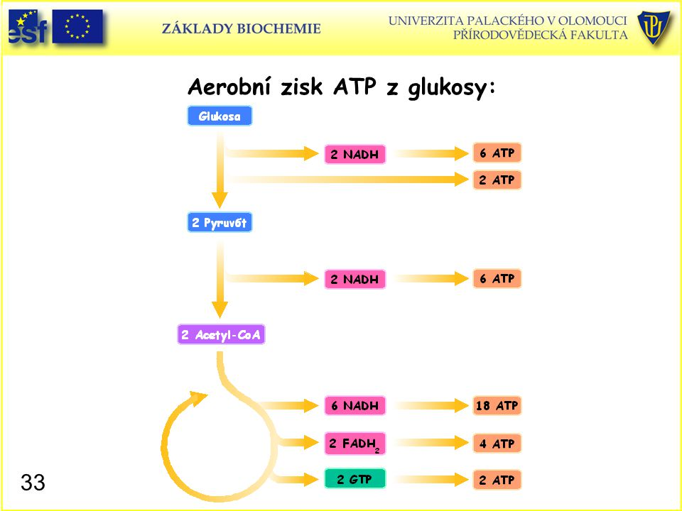 Aerobní zisk ATP z glukosy:
