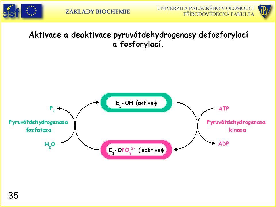 Aktivace a deaktivace pyruvátdehydrogenasy defosforylací a fosforylací.