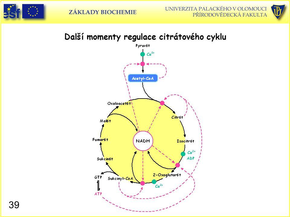 Další momenty regulace citrátového cyklu