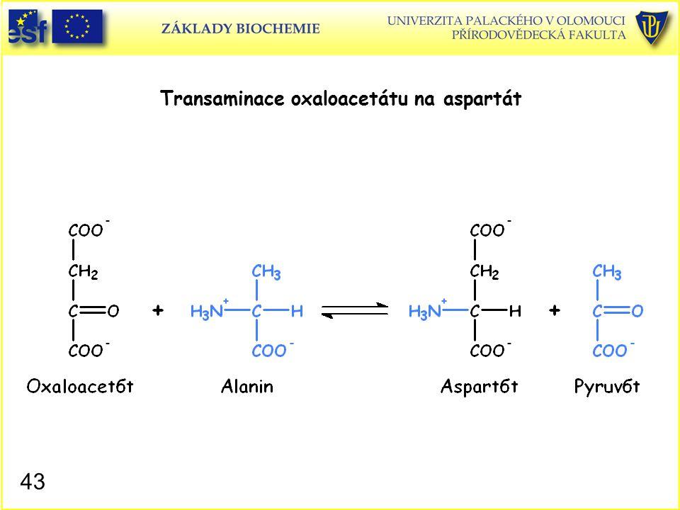 Transaminace oxaloacetátu na aspartát
