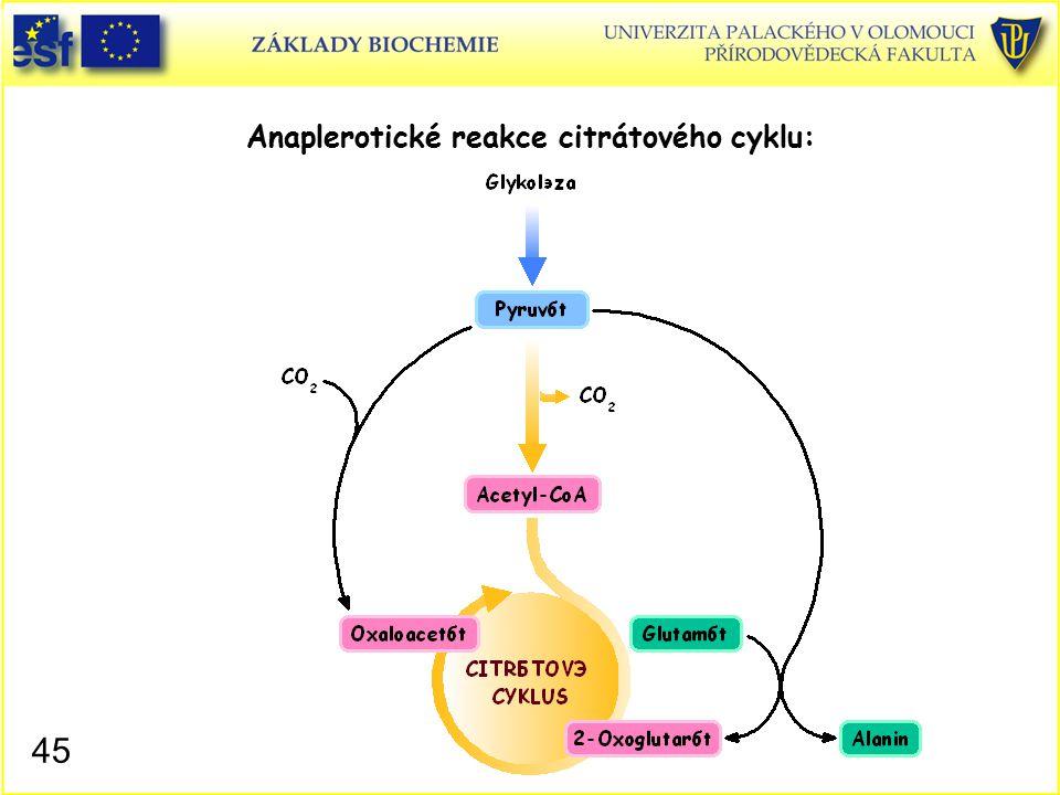 Anaplerotické reakce citrátového cyklu: