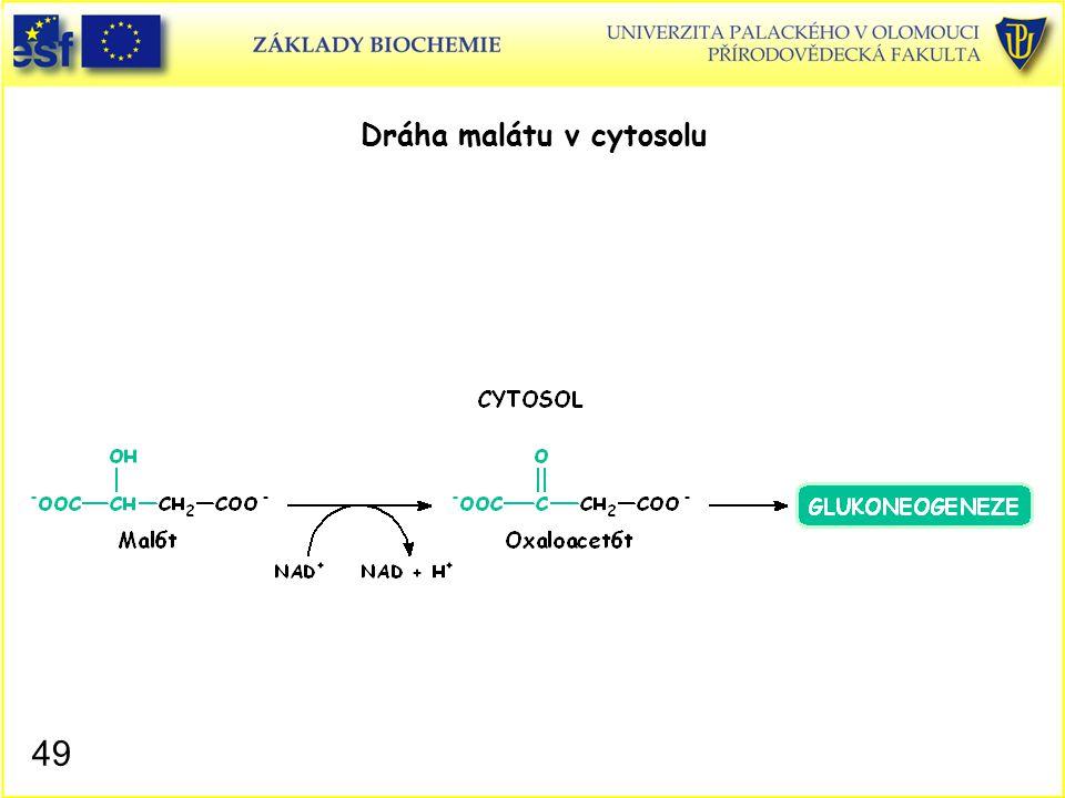 Dráha malátu v cytosolu