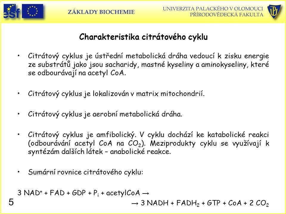 Charakteristika citrátového cyklu