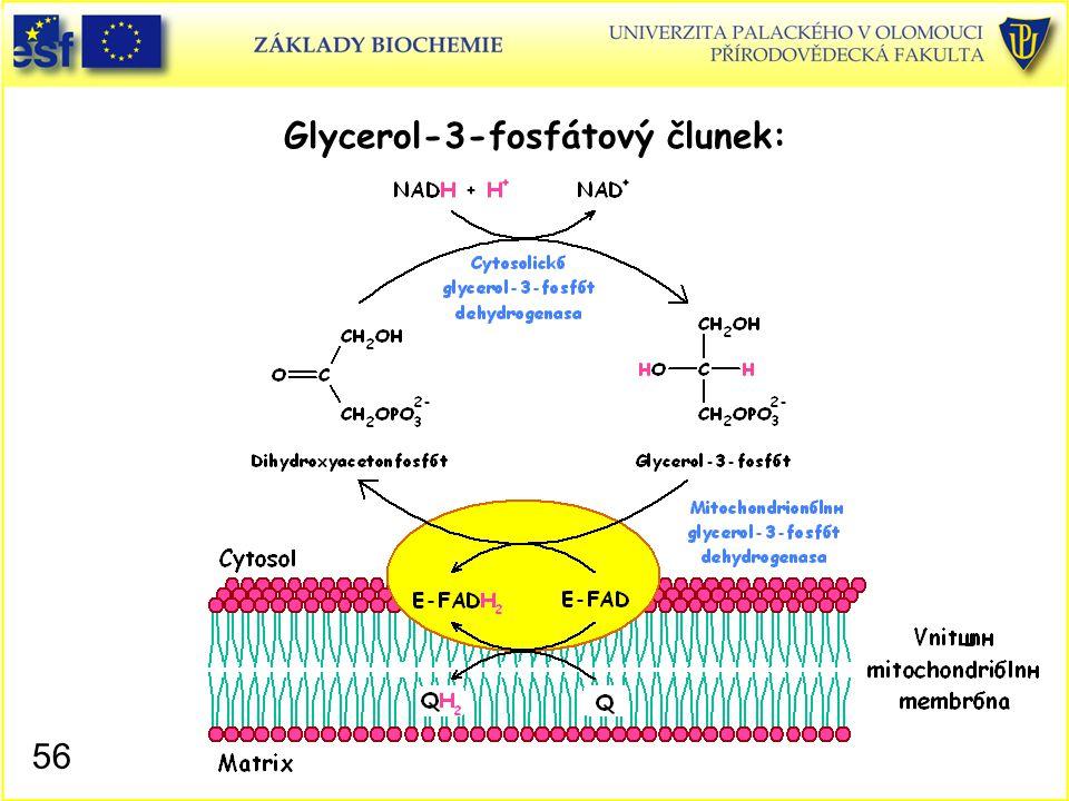 Glycerol-3-fosfátový člunek: