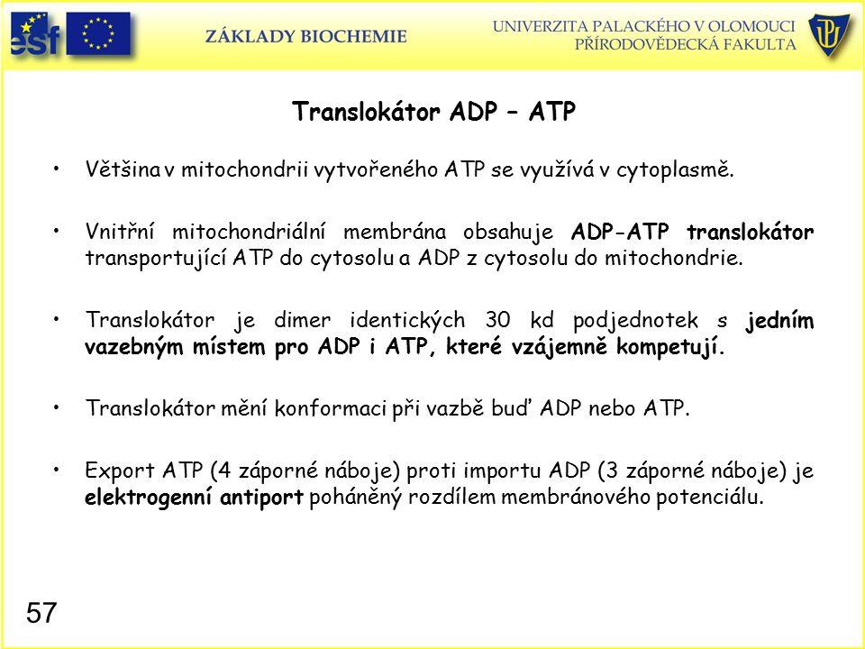 Translokátor ADP – ATP Většina v mitochondrii vytvořeného ATP se využívá v cytoplasmě.