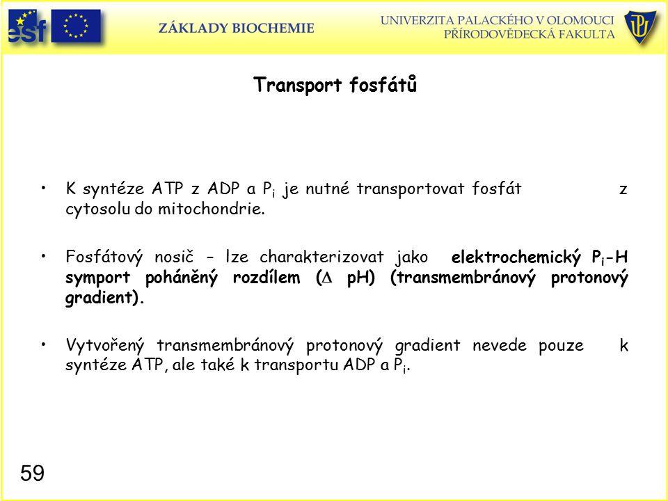 Transport fosfátů K syntéze ATP z ADP a Pi je nutné transportovat fosfát z cytosolu do mitochondrie.