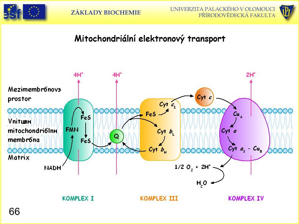 Mitochondriální elektronový transport