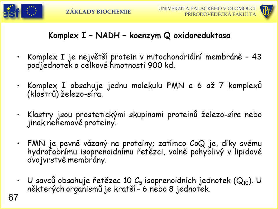 Komplex I – NADH – koenzym Q oxidoreduktasa