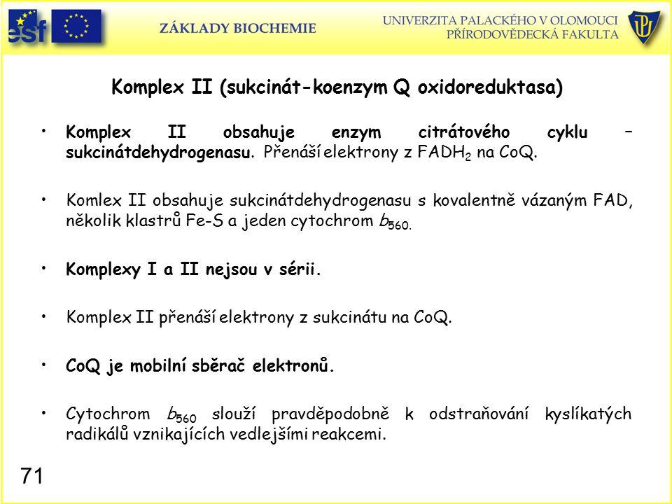 Komplex II (sukcinát-koenzym Q oxidoreduktasa)